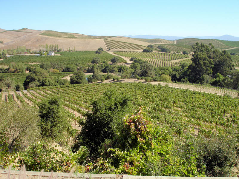 artesa vineyards sonoma valley california 35 Gorgeous Vineyards Around the World