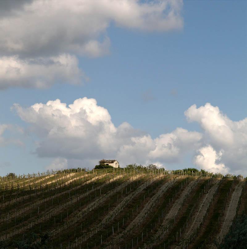 balf hungary vineyard 35 Gorgeous Vineyards Around the World