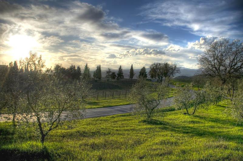 brunello di montalcino tuscany italy 35 Gorgeous Vineyards Around the World