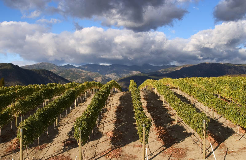 chelan washington benson vineyard 35 Gorgeous Vineyards Around the World