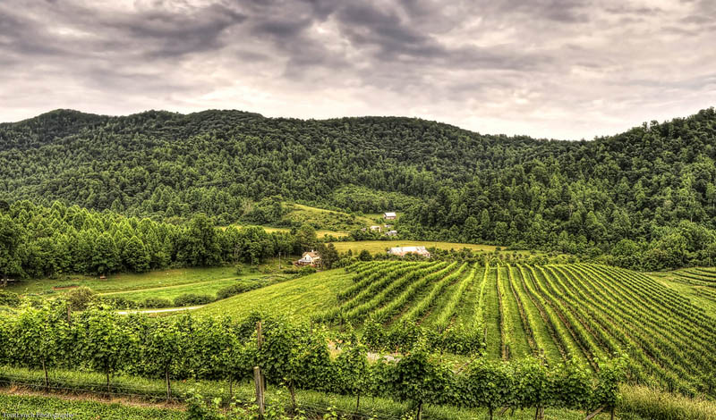 defosse vineyard charlottesville virginia 35 Gorgeous Vineyards Around the World