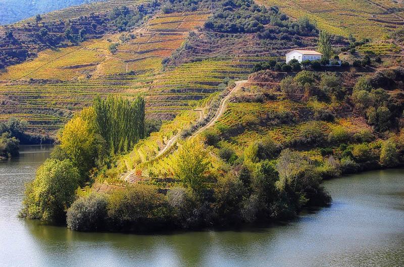 douro valley vineyard portugal 35 Gorgeous Vineyards Around the World