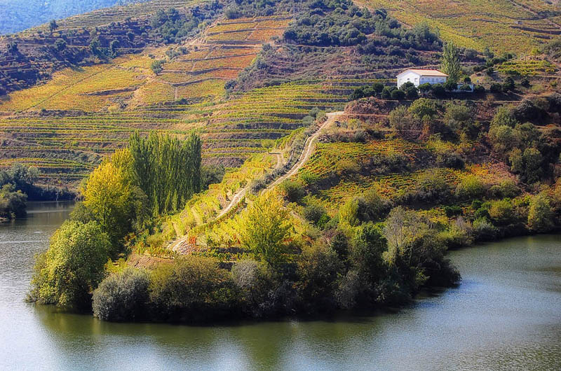 douro valley vineyard portugal 35 Gorgeous Vineyards Around the World