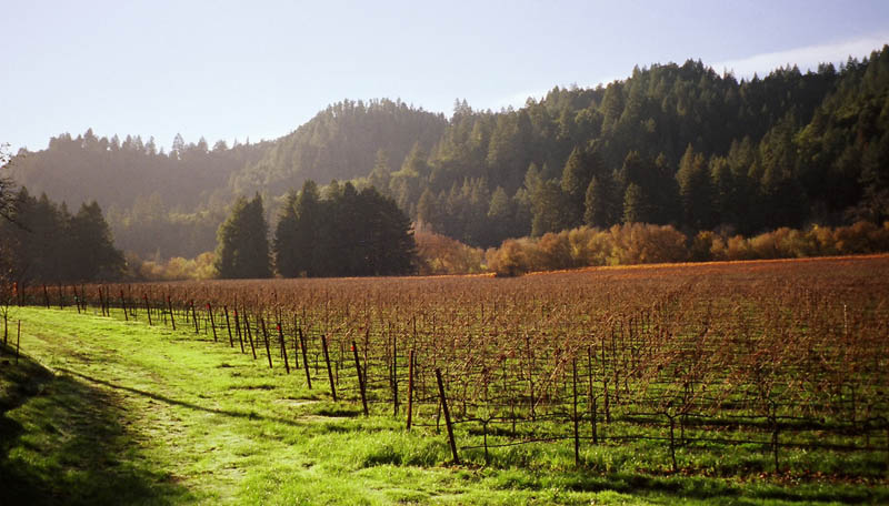 drake vineyard gurneville california 35 Gorgeous Vineyards Around the World