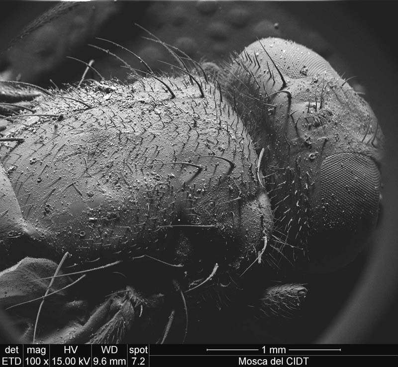 fly under microscope ivan jimenez boone Incredible Examples of Electron Microscope Photography