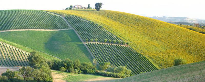 gold hill ticino switzerland 35 Gorgeous Vineyards Around the World