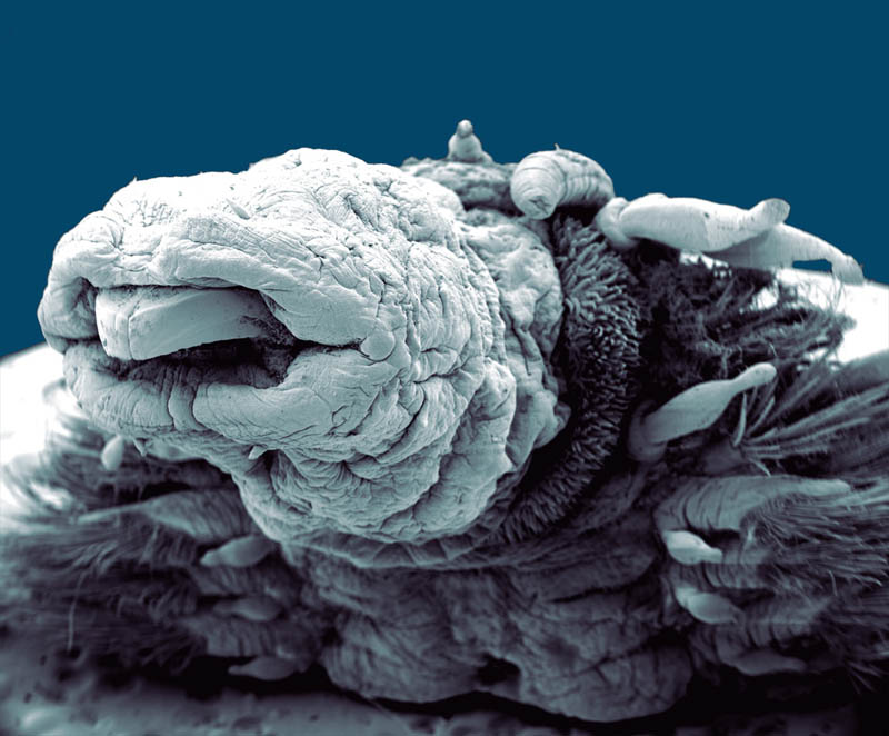 hydrothermal worm macro philippe craqssous Incredible Examples of Electron Microscope Photography