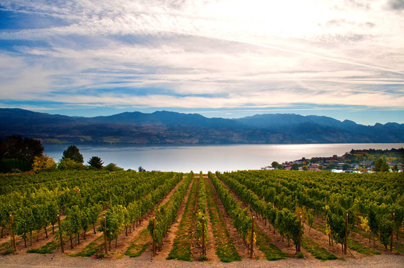 kelowna vineyard british columbia canada 35 Gorgeous Vineyards Around the World