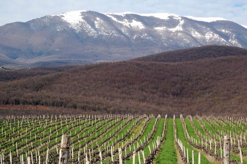 kir yianni vineyards greece 35 Gorgeous Vineyards Around the World