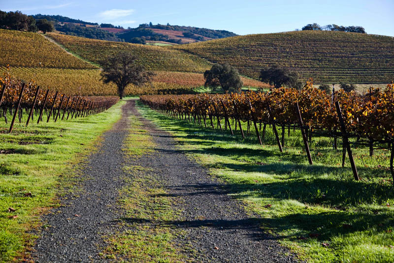 kunde estate vineyards sonoma county california 35 Gorgeous Vineyards Around the World