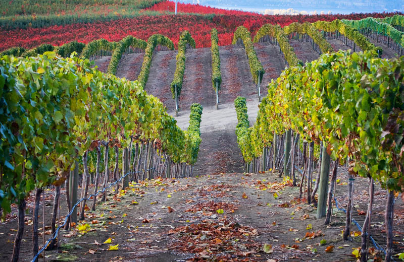 lake chelan vineyard washington state usa 35 Gorgeous Vineyards Around the World