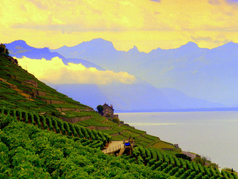 lavaux switzerland 35 Gorgeous Vineyards Around the World