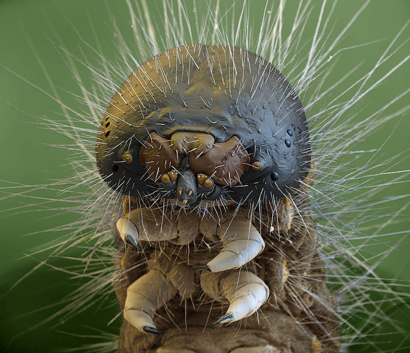 macro caterpillar microscopic photograph oliver meckes Incredible Examples of Electron Microscope Photography