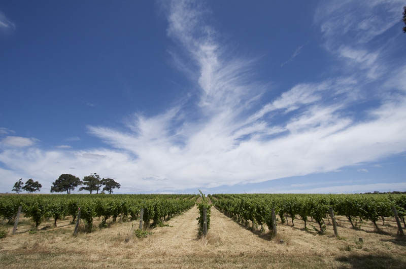 margaret river vineyard western australia 35 Gorgeous Vineyards Around the World