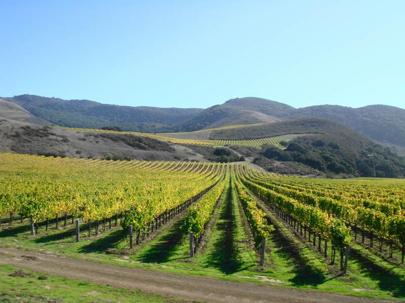 mission california us 35 Gorgeous Vineyards Around the World