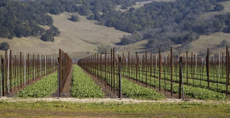 napa valley vineyard california 35 Gorgeous Vineyards Around the World
