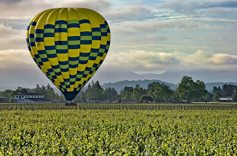 napa valley vineyard 35 Gorgeous Vineyards Around the World