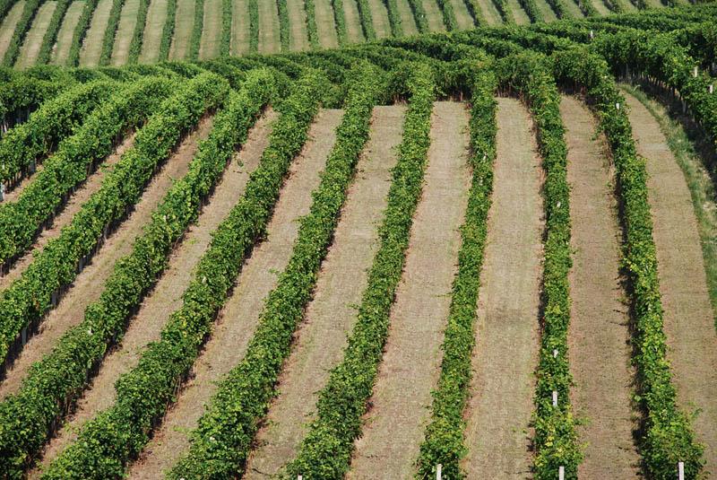 palava czech republic 35 Gorgeous Vineyards Around the World