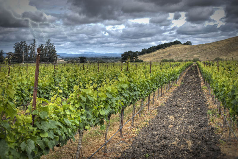 penngrove vineyards sonoma county 35 Gorgeous Vineyards Around the World