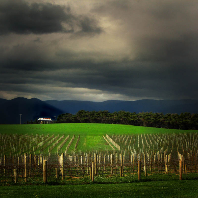 train trak vineyard yarra valley australia 35 Gorgeous Vineyards Around the World