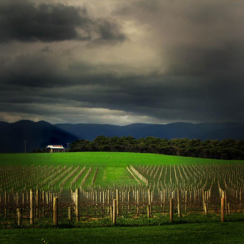 train trak vineyard yarra valley australia 35 Gorgeous Vineyards Around the World