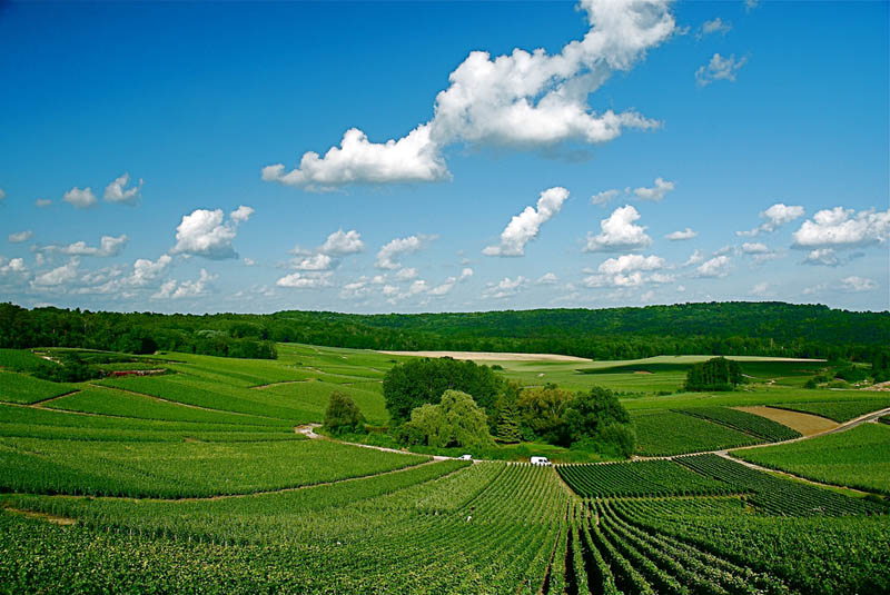 trigny champgne france 35 Gorgeous Vineyards Around the World