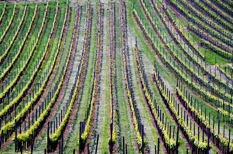 vineyard baden wurttemberg germany 35 Gorgeous Vineyards Around the World