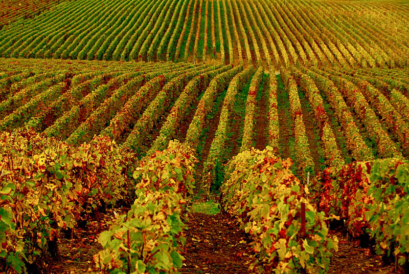 vineyard hermonville france 35 Gorgeous Vineyards Around the World
