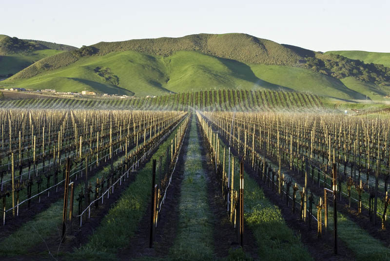 35 Gorgeous Vineyards Around the World