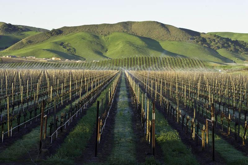 vineyard los alamos santa barbara california 35 Gorgeous Vineyards Around the World