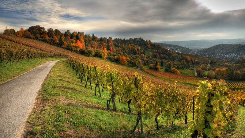 vineyard suttgart germany 35 Gorgeous Vineyards Around the World