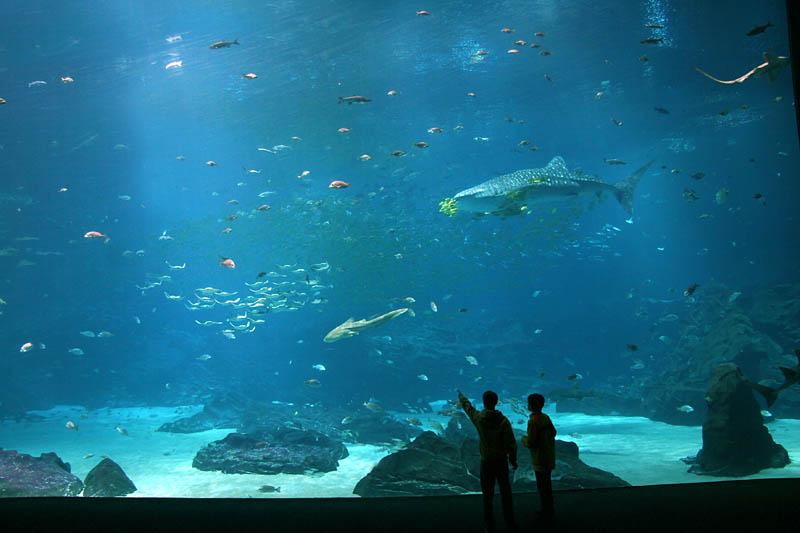 The world 39 s largest aquarium 25 pics twistedsifter for Georgia freshwater fish