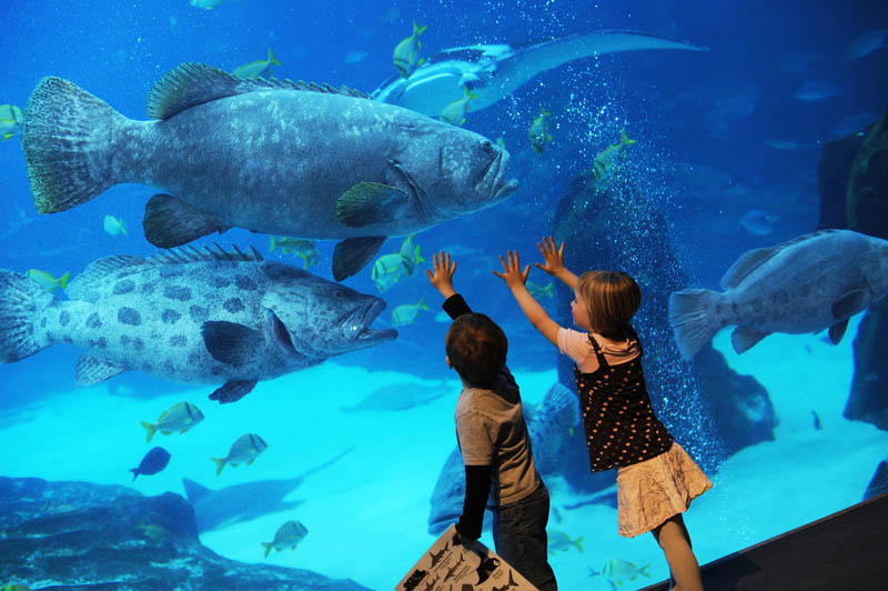 worlds largest aquarium atlanta georgia 13 The World's Largest Aquarium [25 pics]