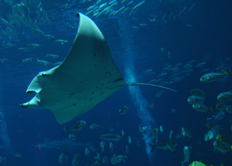 worlds largest aquarium atlanta georgia 14 The World's Largest Aquarium [25 pics]