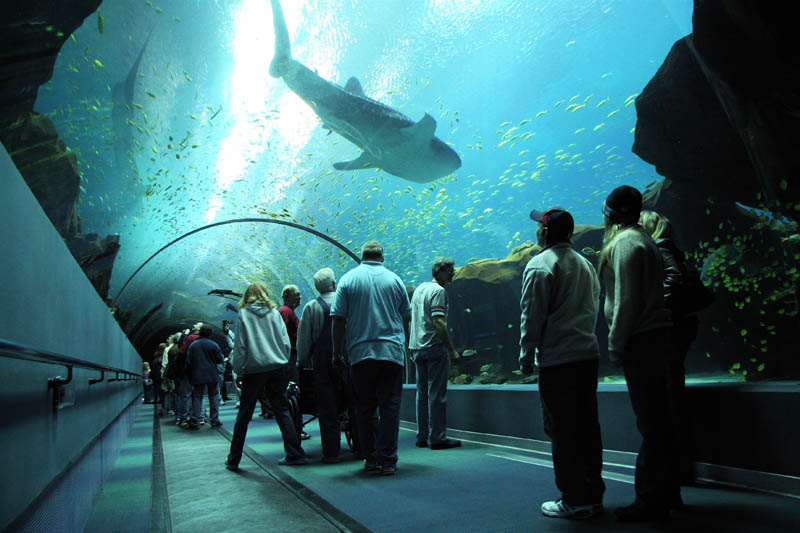 The world 39 s largest aquarium 25 pics twistedsifter Aquarium in georgia