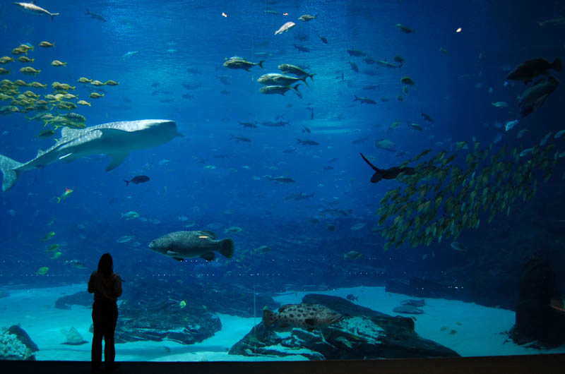 worlds largest aquarium atlanta georgia 17 The World's Largest Aquarium [25 pics]