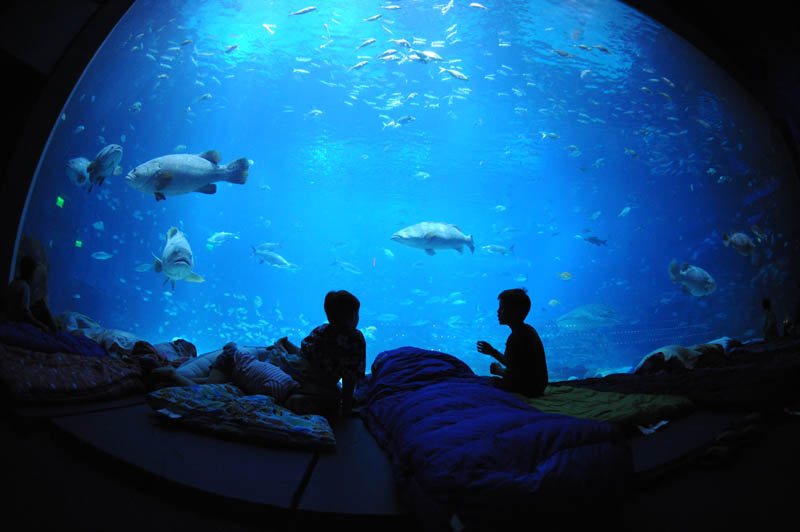 worlds largest aquarium atlanta georgia 18 The World's Largest Aquarium [25 pics]