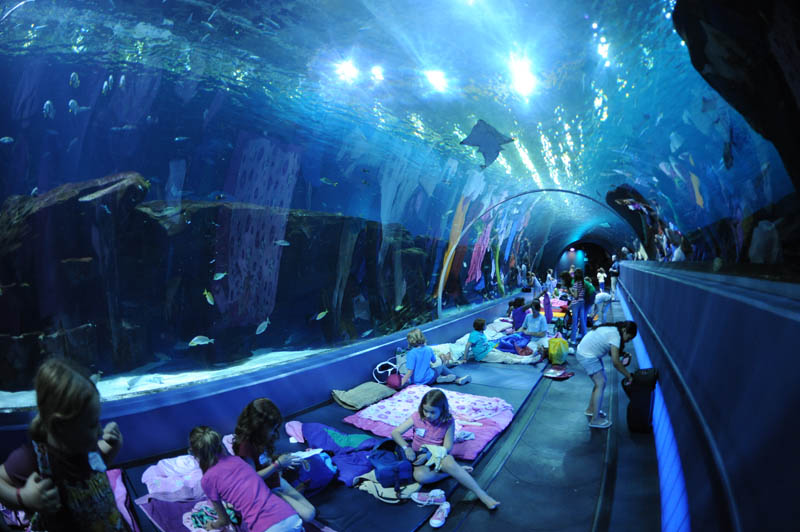 worlds largest aquarium atlanta georgia 20 The World's Largest Aquarium [25 pics]