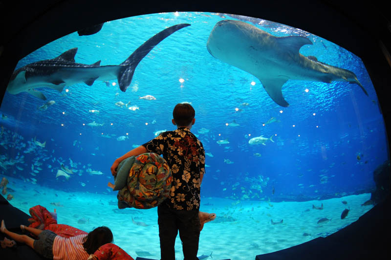 worlds largest aquarium atlanta georgia 21 The World's Largest Aquarium [25 pics]