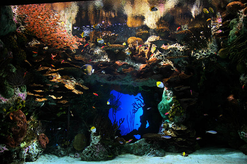 worlds largest aquarium atlanta georgia 22 The World's Largest Aquarium [25 pics]