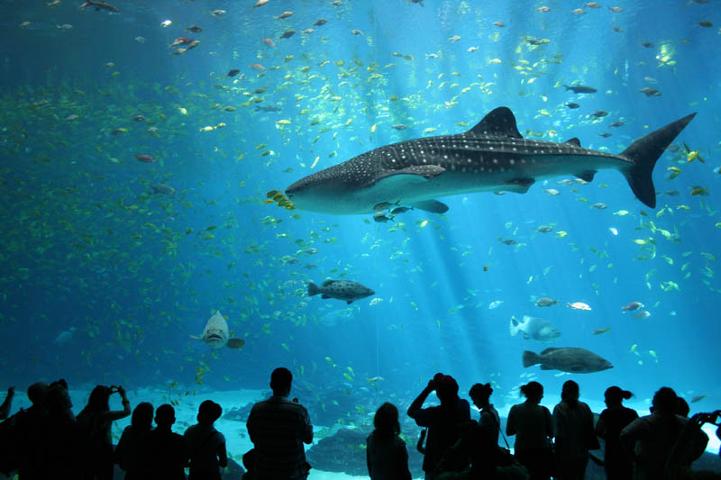 worlds largest aquarium atlanta georgia 23 The World's Largest Aquarium [25 pics]
