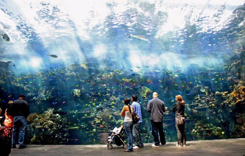 worlds largest aquarium atlanta georgia 8 The World's Largest Aquarium [25 pics]