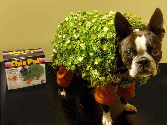 chia pet dog hilarious halloween costume 25 Hilarious Halloween Costumes from the Weekend