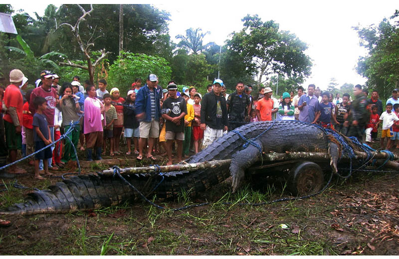 giant crocodile caught in philippines biggest largest ever