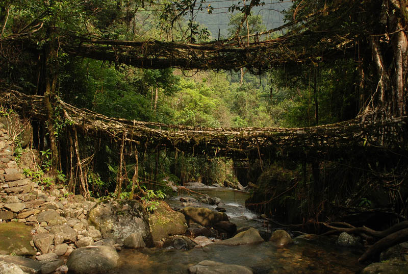 living root bridges meghalaya india Picture of the Day: Living Root Bridges of Meghalaya, India