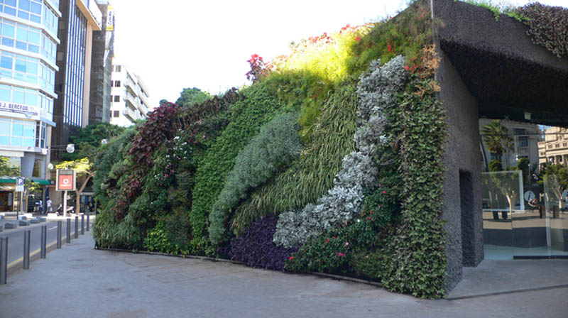 plaza de espana santa cruz de tenerife 3 15 Incredible Vertical Gardens Around the World