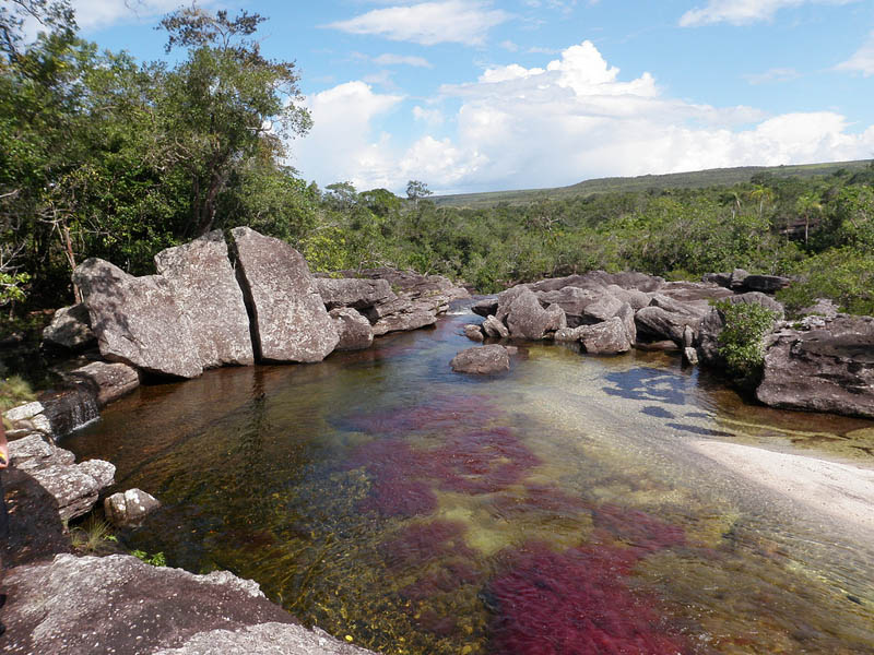 rio cano cristales river of five colours columbia 7 The River of Five Colors: Cano Cristales, Colombia