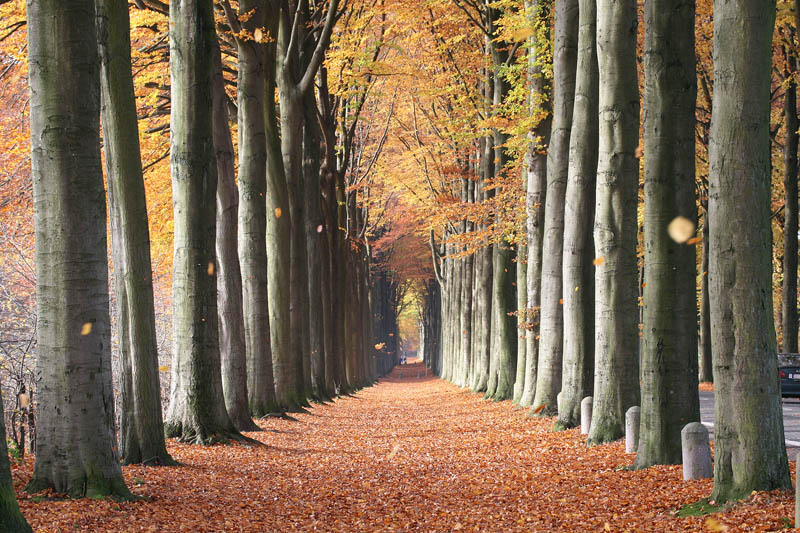 european beech trees of mariemont belgium The Top 50 Pictures of the Day for 2011
