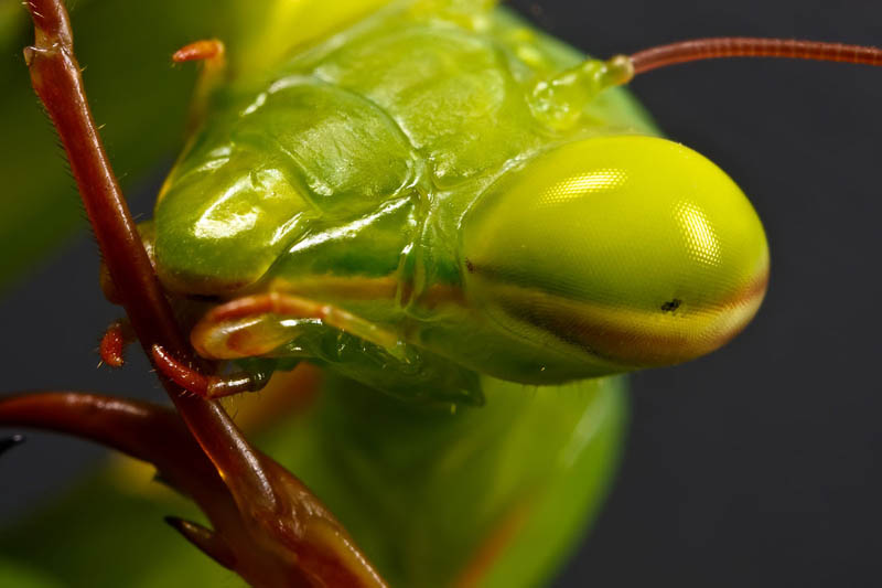mantis maintenance by dalantech The Incredible Praying Mantis [25 pics]