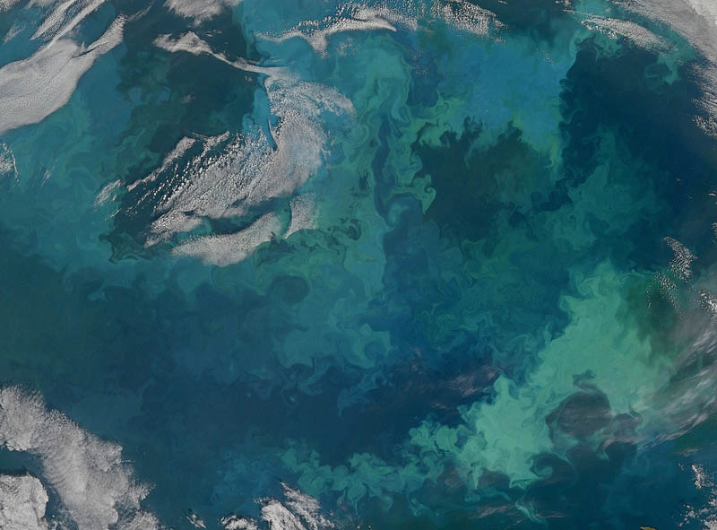 plankton bloom barents sea 15 Mind Blowing Featured Images by NASA